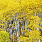Fall Aspen Meadow Art Print