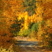 Fall Aspen Trail Art Print