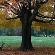 Fall At Maymont Art Print