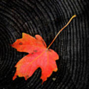 Fall Autumn Leaf On Old Weathered Wood Stump From A Tree Art Print