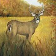 Fall Buck Art Print