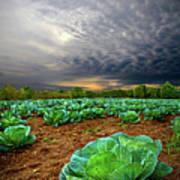 Fall Cabbage Art Print