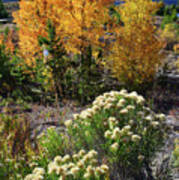 Fall Color Comes To Dillon Reservoir Art Print