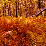 Fall Color In The Woods Art Print