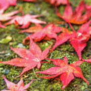 Fall Color Maple Leaves At The Forest In Nikko, Tochigi, Japan Art Print