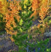 Fall Colors Along Dillon Reservoir Art Print