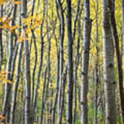 Fall Colors In Maine 2 Art Print