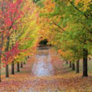 Fall Colors In Oregon Art Print