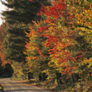 Fall Colors Line A New England Road Art Print by Heather Perry