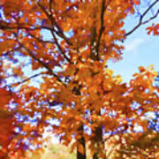 Fall Colors Looking Awesome Art Print