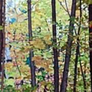 Fall Colour Medley Art Print