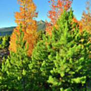 Fall Comes To Dillon Colorado Art Print