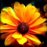 Fall Flower 2.0 Art Print