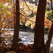 Fall Flows Art Print