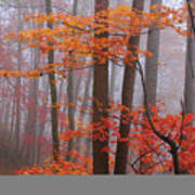 Fall Fog. Art Print