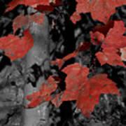 Fall Foliage In Pennsylvania Art Print