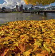 Fall Foliage In Portland Oregon City Art Print