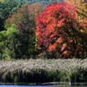 Fall Foliage Marsh Art Print