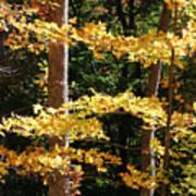Fall Forest 1 Art Print
