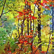 Fall Forest 2 Art Print