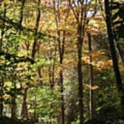 Fall Forest 2 Art Print