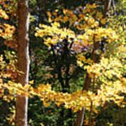 Fall Forest 3 Art Print