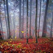 Fall Forest In Fog Art Print
