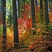 Fall Forest Splendor Art Print
