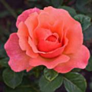 Fall Gardens Rosh Hashana Rose Art Print