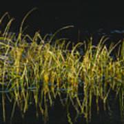 Fall Grasses - Snake River Art Print