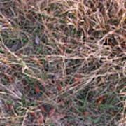 Fall Grasses Art Print