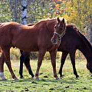 Horses Fall Grazing Art Print