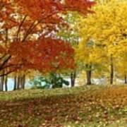 Fall In Kaloya Park 9 Art Print