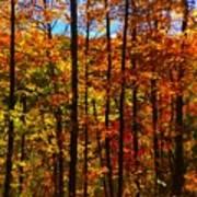 Fall In Ontario Canada Art Print