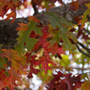 Fall In Virginia Art Print