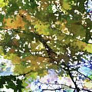 Fall In Woods Art Print
