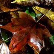 Fall Into Fall Art Print