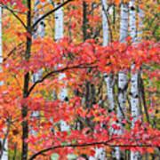 Fall Layers Art Print