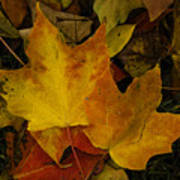 Fall Leaf Litter Art Print