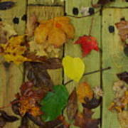 Fall Leaves On The Deck Art Print