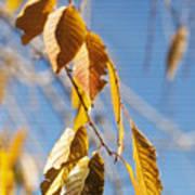 Fall Leaves Study 3 Art Print