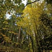 Fall Maple In Yosemite Art Print