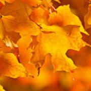 Fall Maple Leaves Art Print by Elena Elisseeva