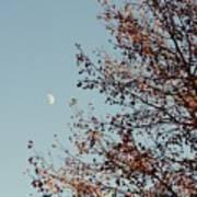 Fall Moon Art Print