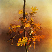 Fall Oak Leaves Art Print