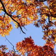 Fall Oak Leaves Up Above Art Print
