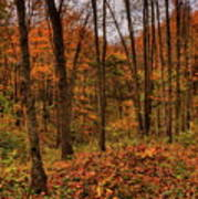Fall On The Ice Age Trail Art Print