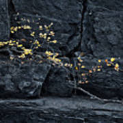 Fall On The Rocks Art Print