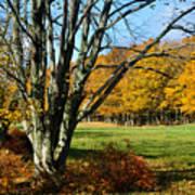 Fall Pasture Art Print
