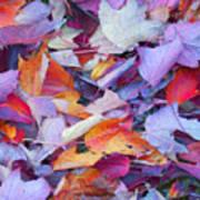 Fall Purples  Art Print